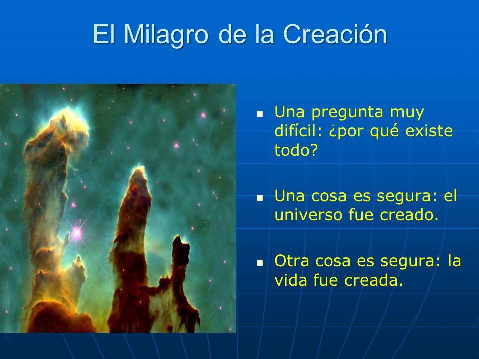 El Milagro de la Creación