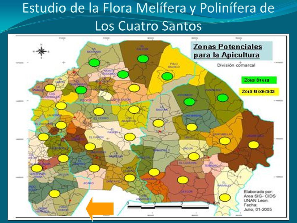 Estudio de la Flora Melífera y Polinífera de Los Cuatro Santos