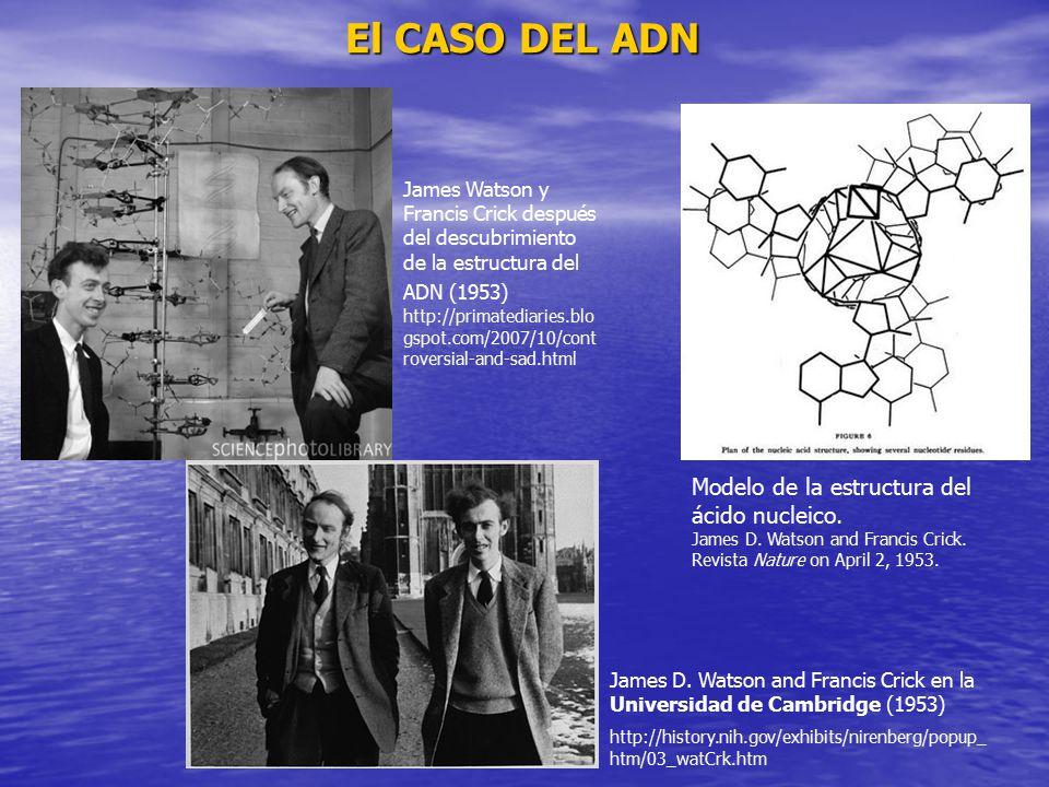 El CASO DEL ADN Modelo de la estructura del ácido nucleico.