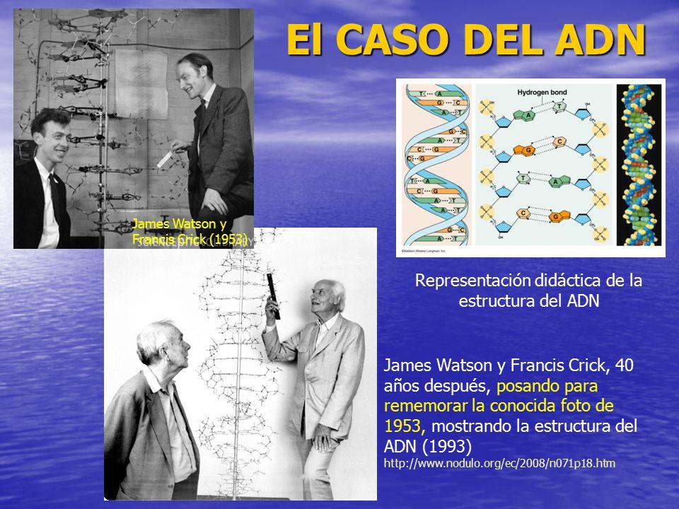 Representación didáctica de la estructura del ADN