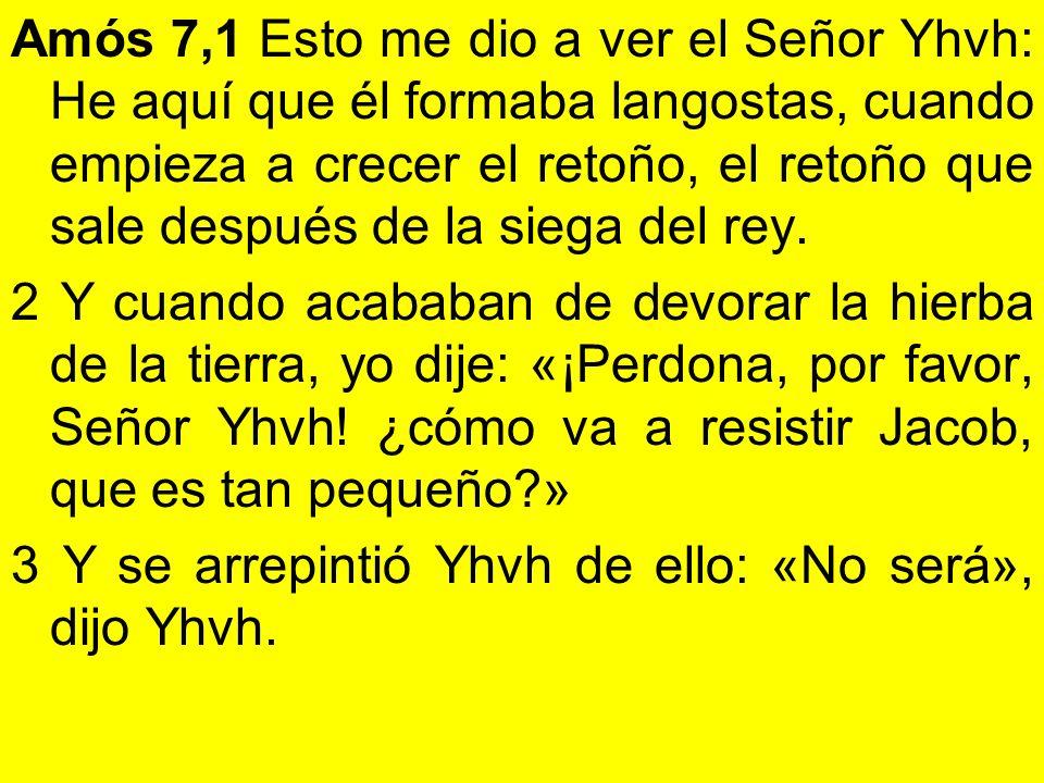 Amós 7,1 Esto me dio a ver el Señor Yhvh: He aquí que él formaba langostas, cuando empieza a crecer el retoño, el retoño que sale después de la siega del rey.