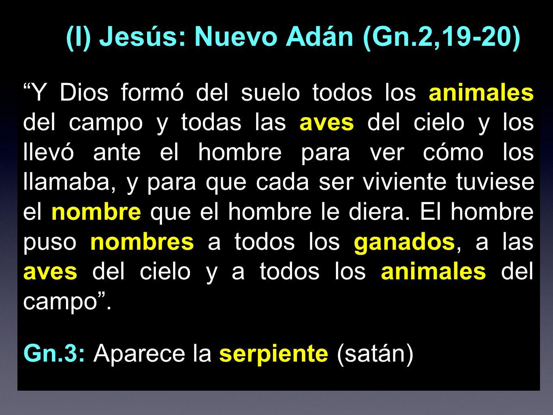 (I) Jesús: Nuevo Adán (Gn.2,19-20)
