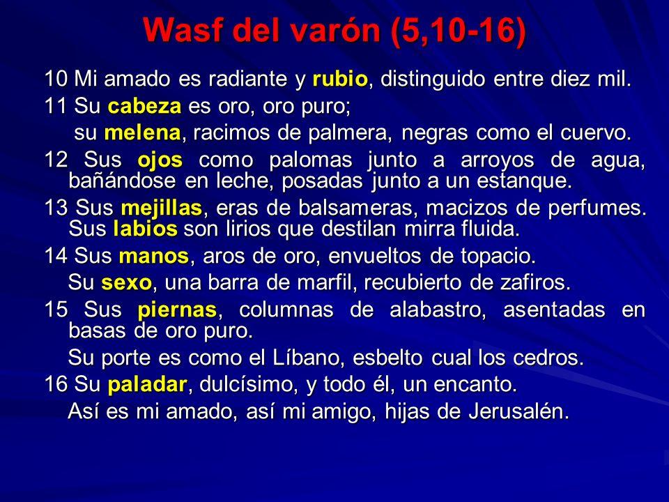 Wasf del varón (5,10-16) 10 Mi amado es radiante y rubio, distinguido entre diez mil. 11 Su cabeza es oro, oro puro;