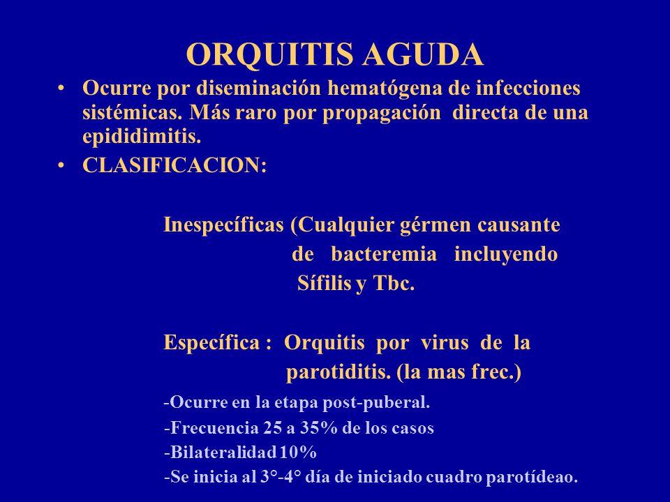ORQUITIS AGUDA Ocurre por diseminación hematógena de infecciones sistémicas. Más raro por propagación directa de una epididimitis.
