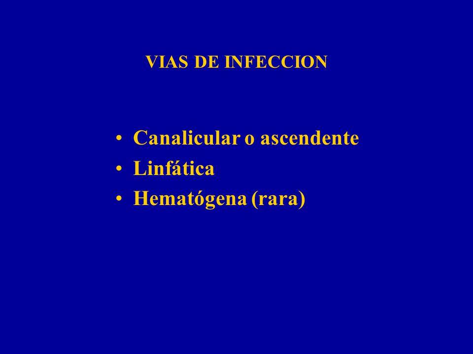 Canalicular o ascendente Linfática Hematógena (rara)