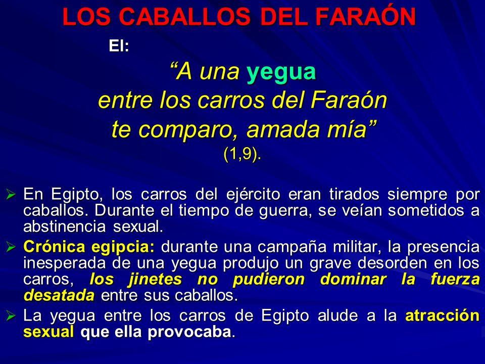 LOS CABALLOS DEL FARAÓN