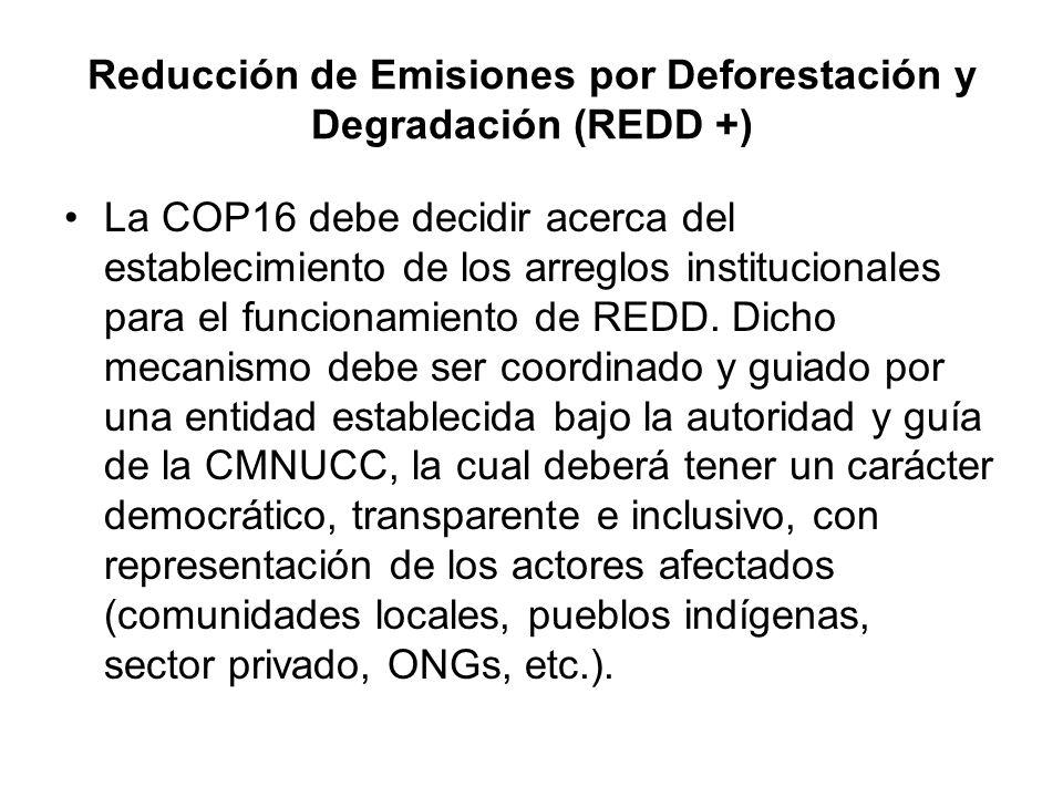 Reducción de Emisiones por Deforestación y Degradación (REDD +)