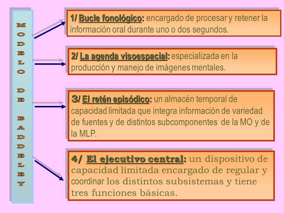 1/ Bucle fonológico: encargado de procesar y retener la información oral durante uno o dos segundos.