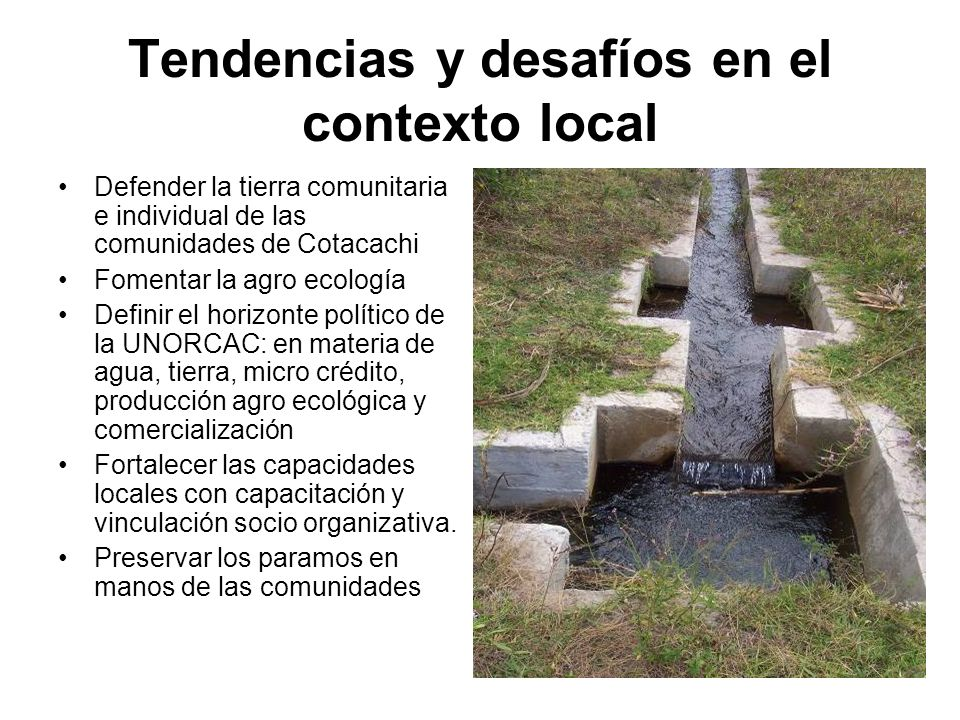 Tendencias y desafíos en el contexto local