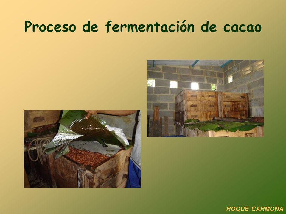 Proceso de fermentación de cacao