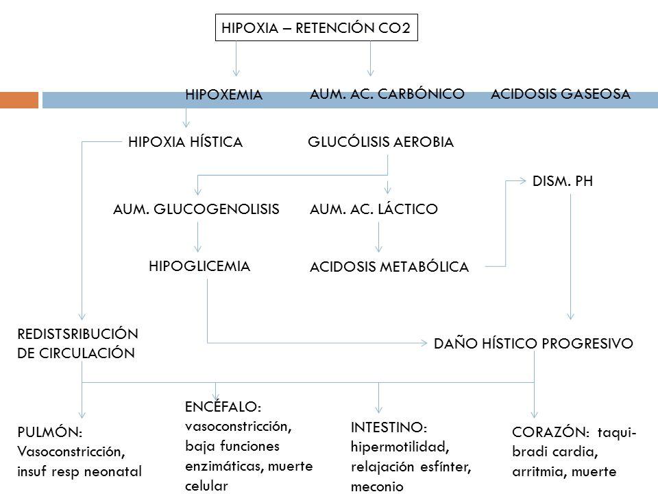 HIPOXIA – RETENCIÓN CO2 HIPOXEMIA. AUM. AC. CARBÓNICO. ACIDOSIS GASEOSA. HIPOXIA HÍSTICA. GLUCÓLISIS AEROBIA.