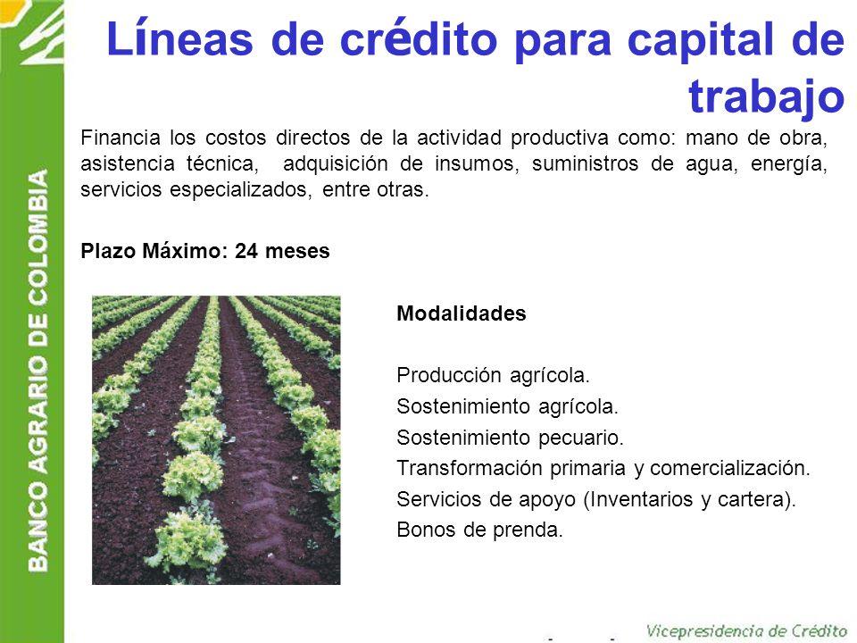 Líneas de crédito para capital de trabajo