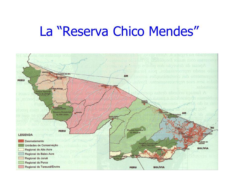 La Reserva Chico Mendes