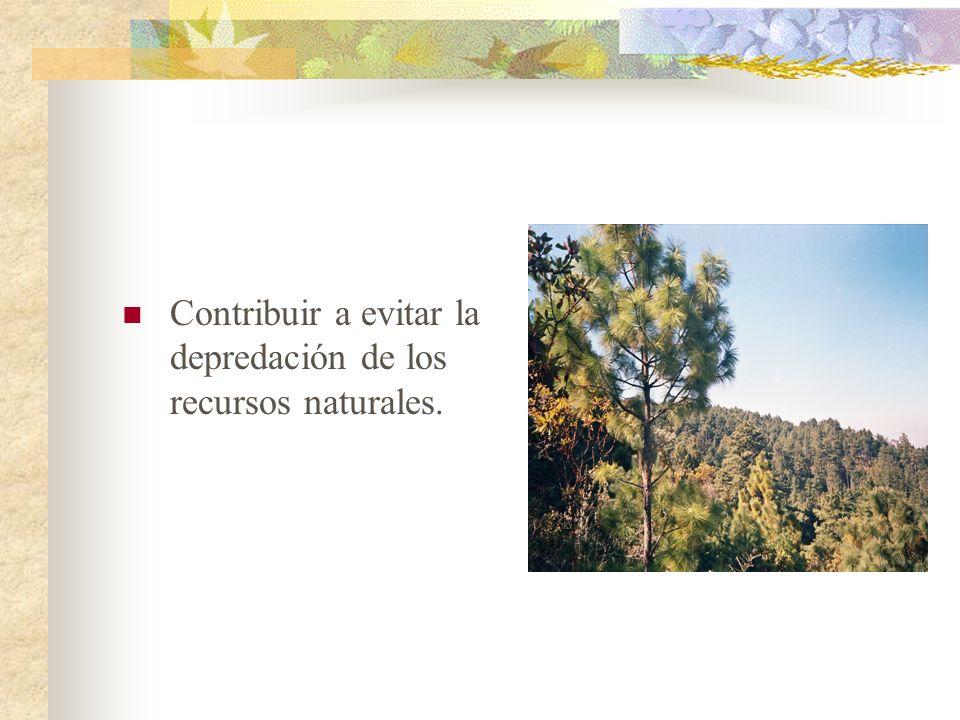 Contribuir a evitar la depredación de los recursos naturales.