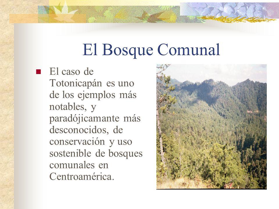 El Bosque Comunal