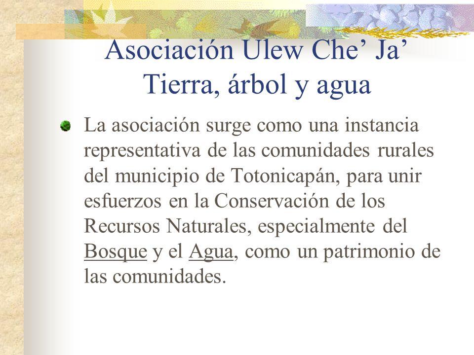 Asociación Ulew Che' Ja' Tierra, árbol y agua
