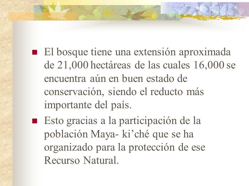 El bosque tiene una extensión aproximada de 21,000 hectáreas de las cuales 16,000 se encuentra aún en buen estado de conservación, siendo el reducto más importante del país.