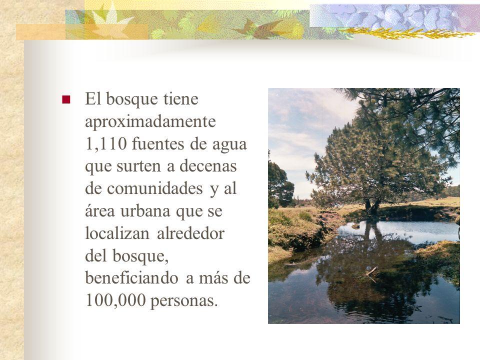 El bosque tiene aproximadamente 1,110 fuentes de agua que surten a decenas de comunidades y al área urbana que se localizan alrededor del bosque, beneficiando a más de 100,000 personas.