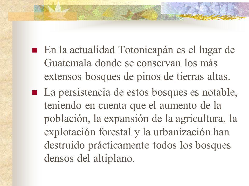 En la actualidad Totonicapán es el lugar de Guatemala donde se conservan los más extensos bosques de pinos de tierras altas.