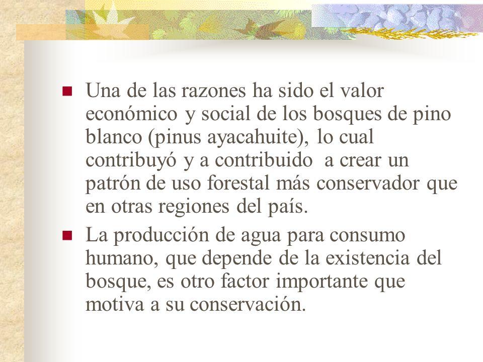 Una de las razones ha sido el valor económico y social de los bosques de pino blanco (pinus ayacahuite), lo cual contribuyó y a contribuido a crear un patrón de uso forestal más conservador que en otras regiones del país.