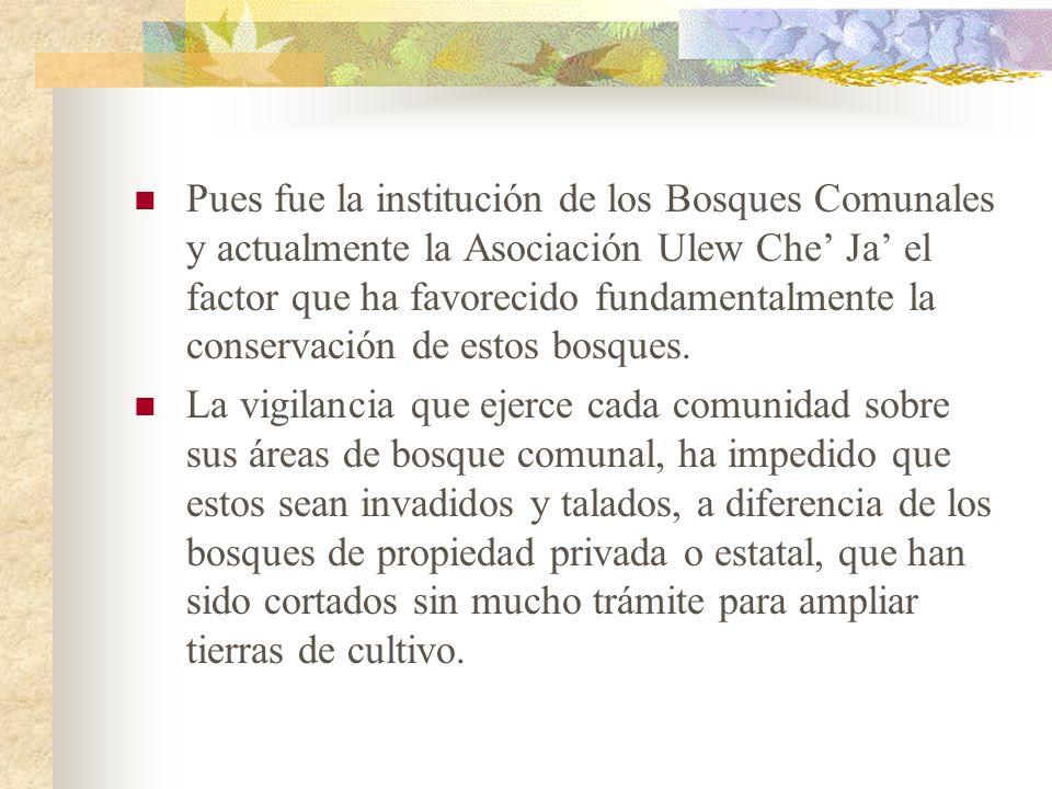 Pues fue la institución de los Bosques Comunales y actualmente la Asociación Ulew Che' Ja' el factor que ha favorecido fundamentalmente la conservación de estos bosques.