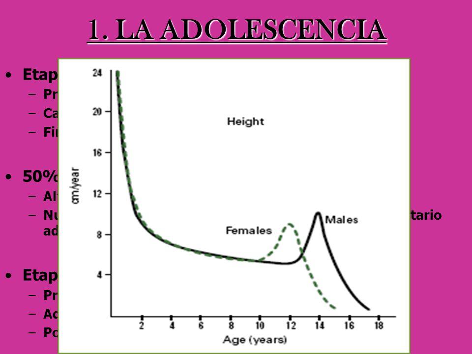 1. LA ADOLESCENCIA Etapa crítica 50% peso corporal definitivo Etapas