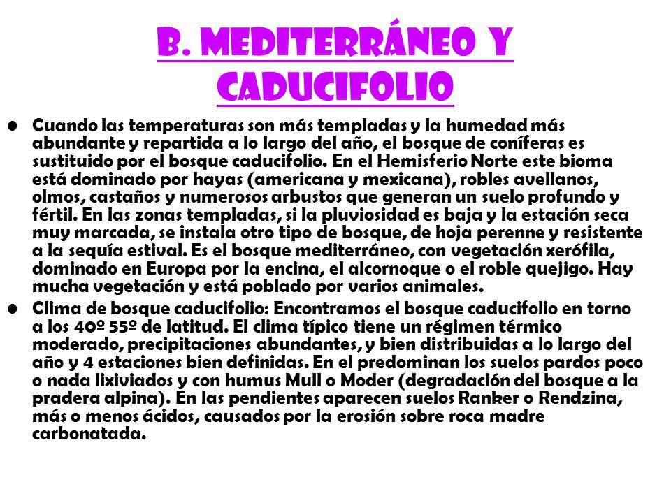 B. Mediterráneo y caducifolio
