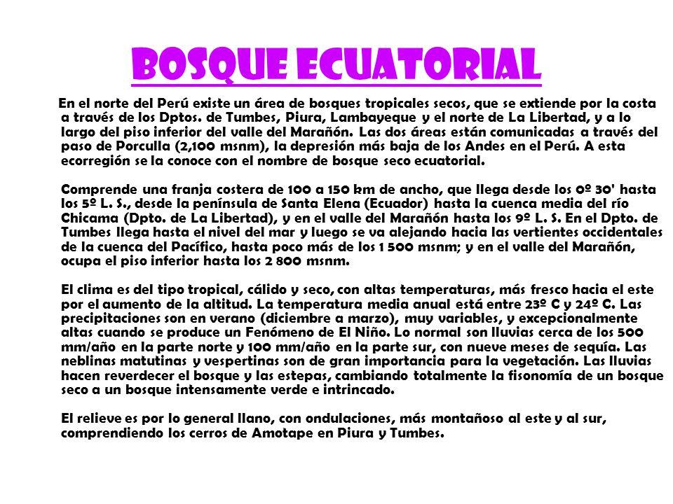 Bosque ecuatorial