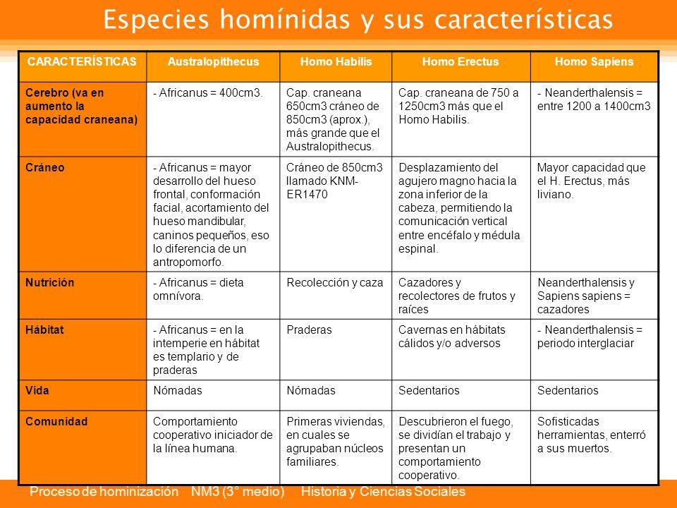 Especies homínidas y sus características