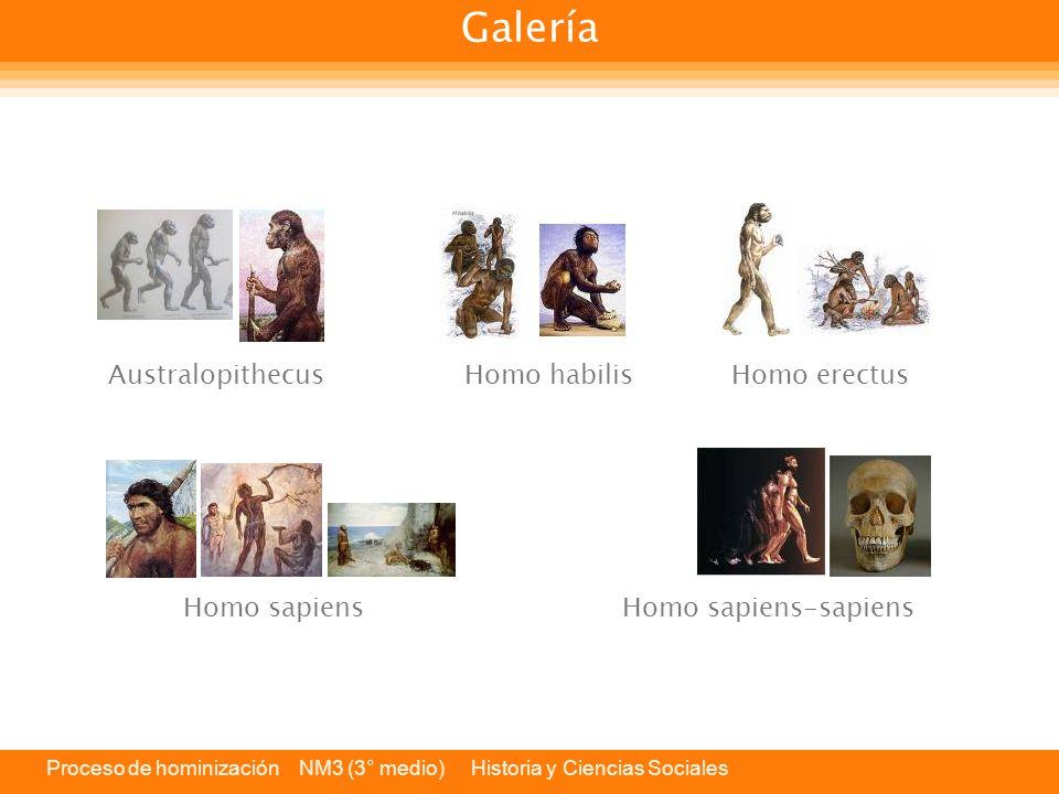 Galería Australopithecus Homo habilis Homo erectus Homo sapiens