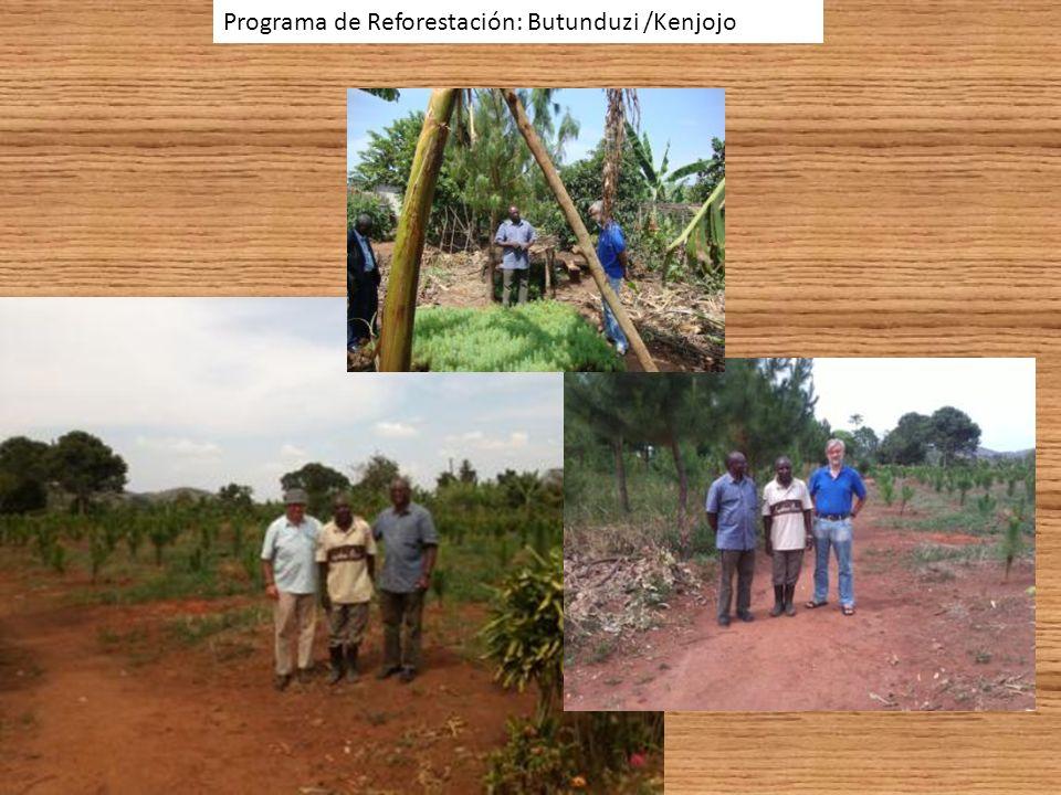 Programa de Reforestación: Butunduzi /Kenjojo