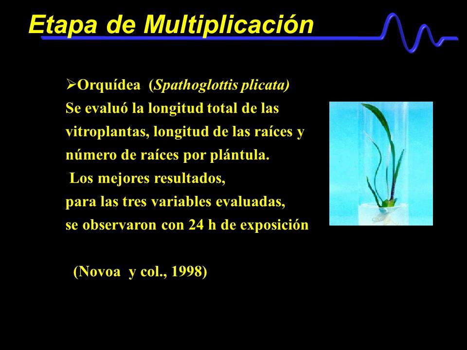 Etapa de Multiplicación