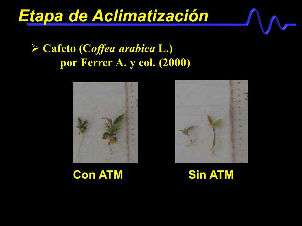Etapa de Aclimatización