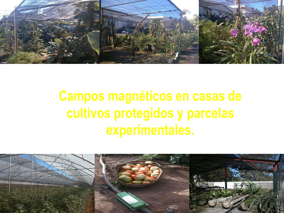 Campos magnéticos en casas de cultivos protegidos y parcelas experimentales.
