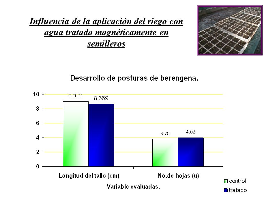 Influencia de la aplicación del riego con agua tratada magnéticamente en semilleros