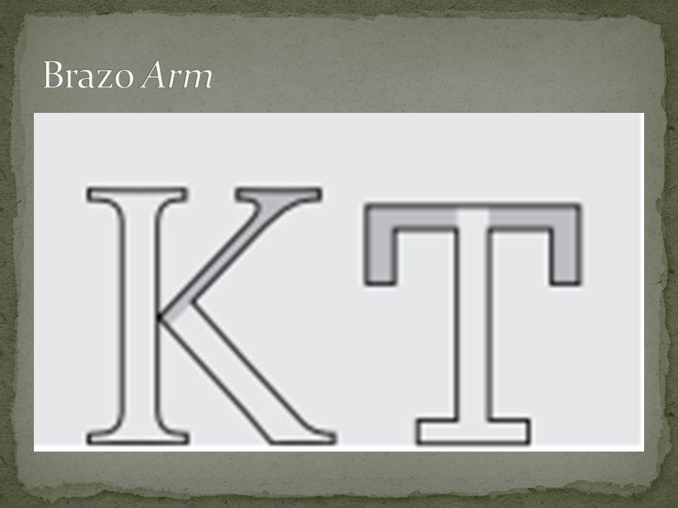 Brazo Arm