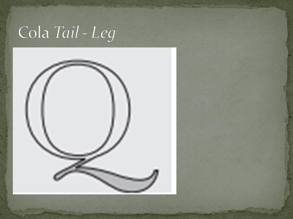 Cola Tail - Leg