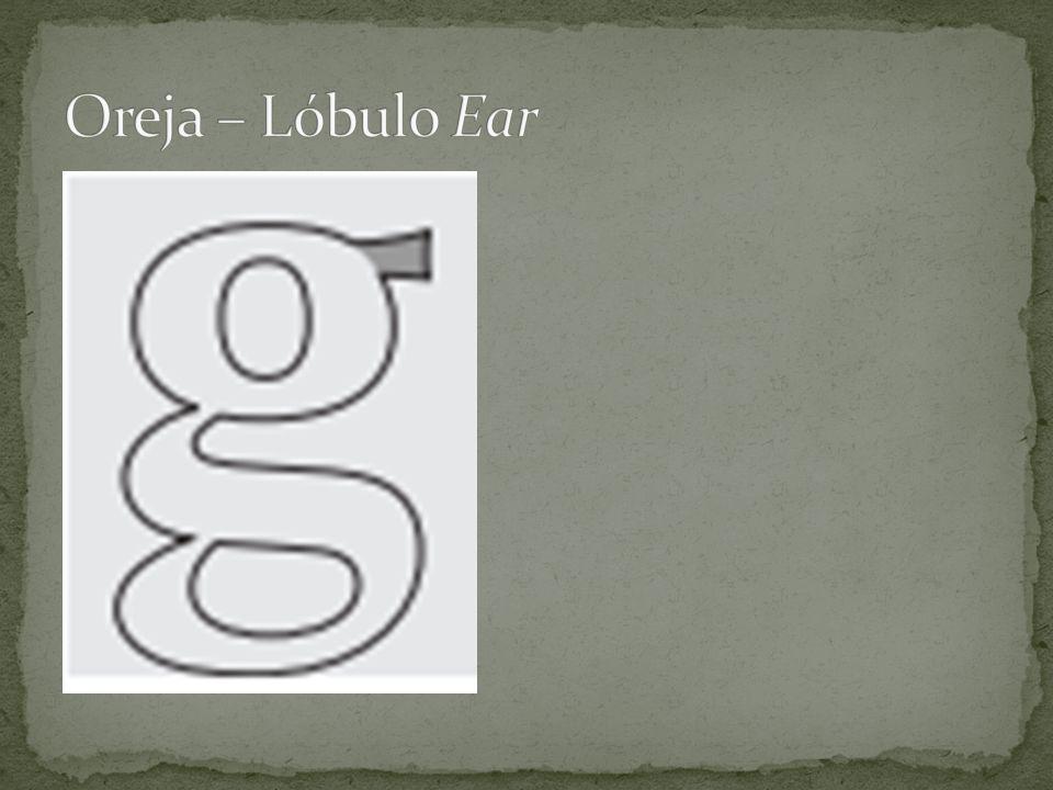 Oreja – Lóbulo Ear