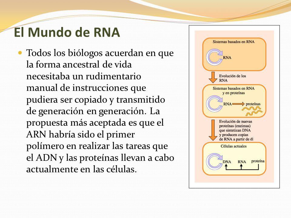 El Mundo de RNA