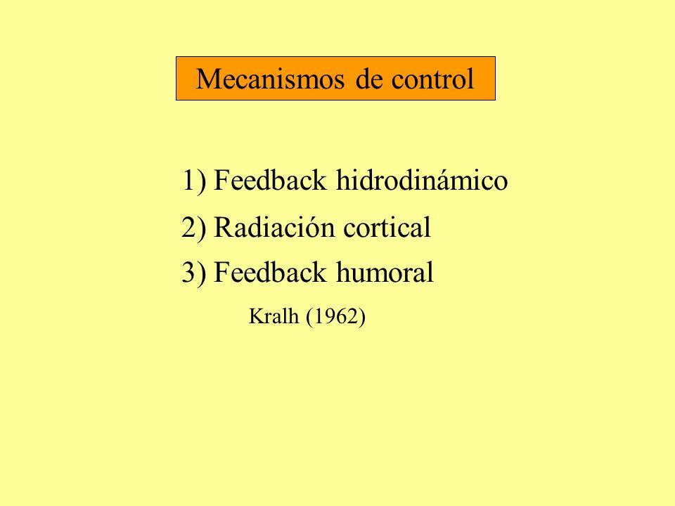 1) Feedback hidrodinámico