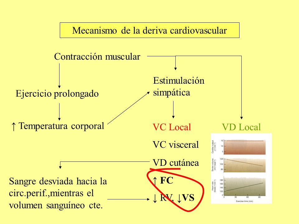 Mecanismo de la deriva cardiovascular
