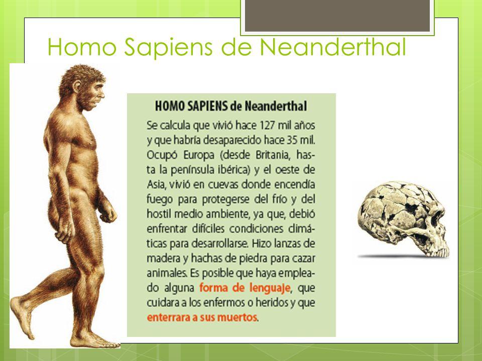 Homo Sapiens de Neanderthal