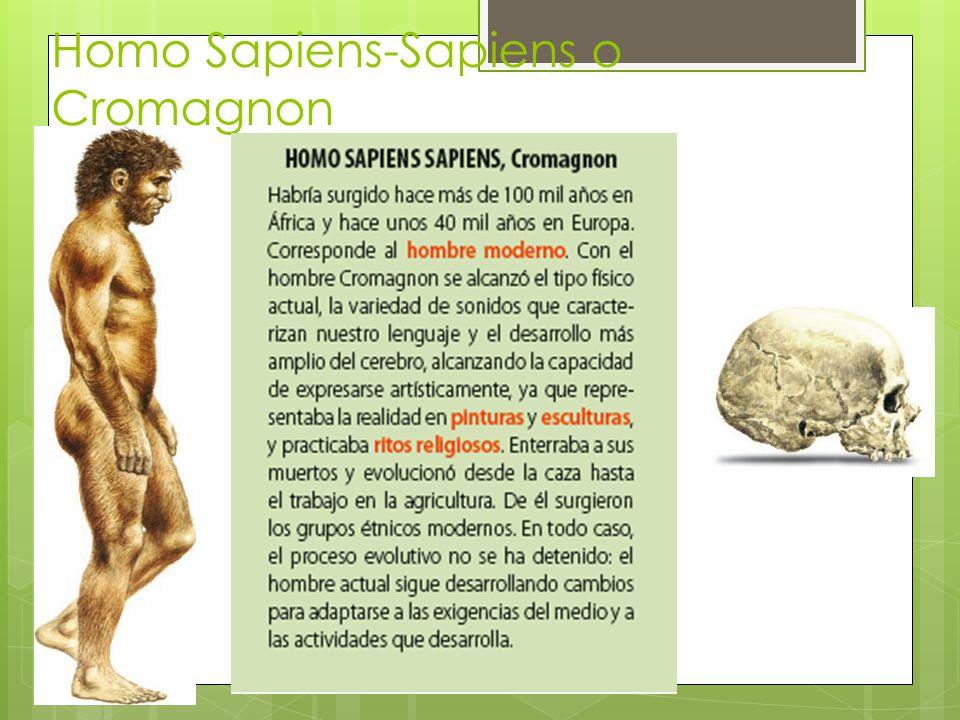 Homo Sapiens-Sapiens o Cromagnon