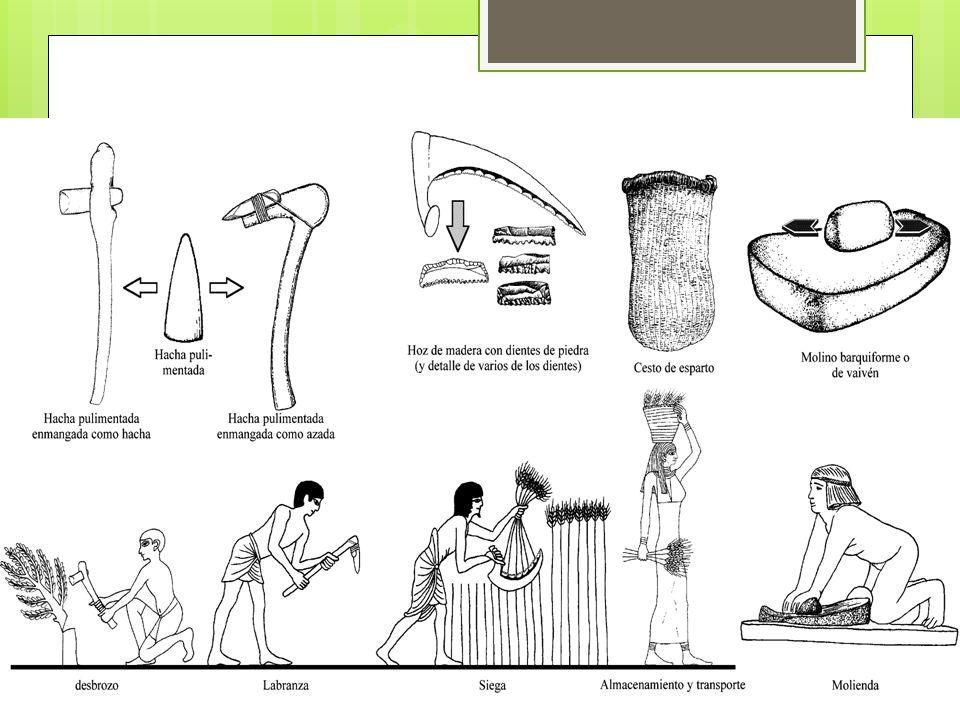 Neolítico: Piedra Pulida