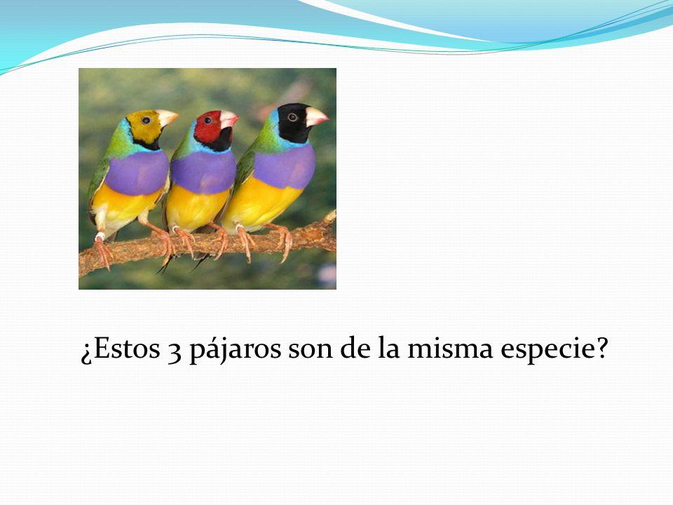 ¿Estos 3 pájaros son de la misma especie
