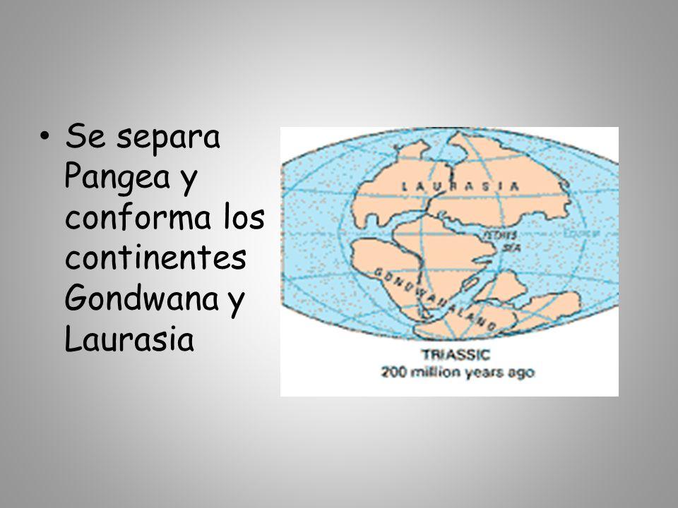 Se separa Pangea y conforma los continentes Gondwana y Laurasia