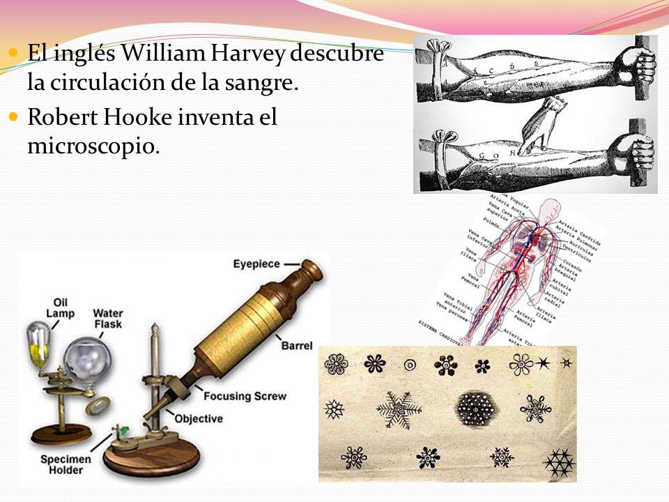 El inglés William Harvey descubre la circulación de la sangre.