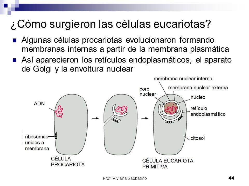 ¿Cómo surgieron las células eucariotas