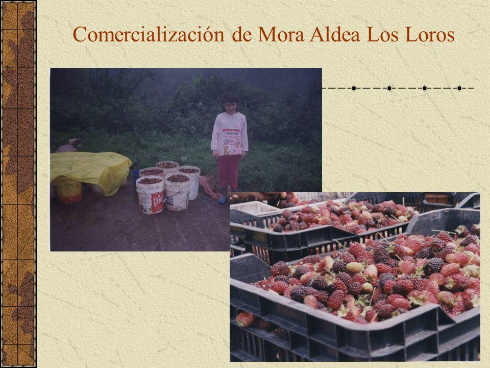 Comercialización de Mora Aldea Los Loros