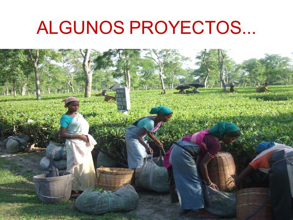 ALGUNOS PROYECTOS...